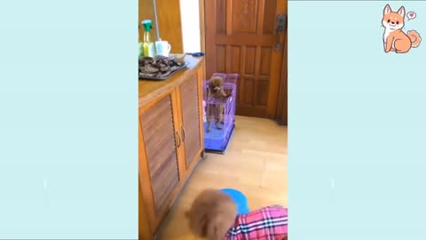 Cute funny and smart dog compilation