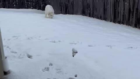 Rosie's First Snow
