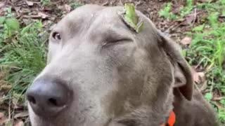 Frog hat? Gentle dog and a frog