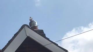 Pigeon Chimney Merry-Go-Round