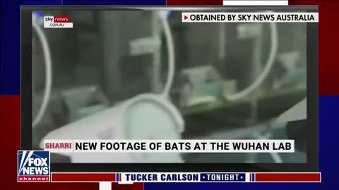 'It Appears Anthony Fauci Lied Under Oath' Brian Kilmeade Fox News