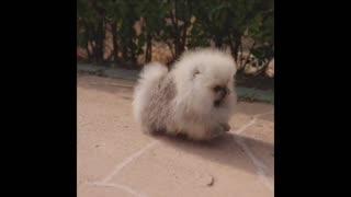 You love me? Cute litle puppy