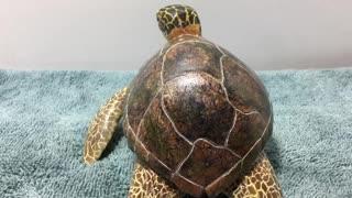 Turtle wood carving