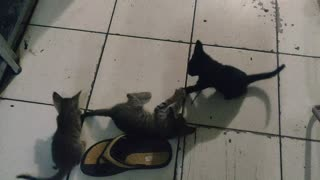 Funny Cats with sister