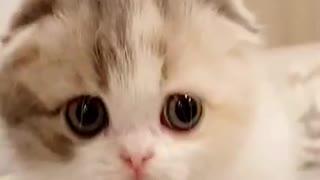 Cute Fluffy Kittens Having Some Fun