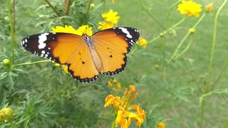 Beautiful butterfly flying over nature