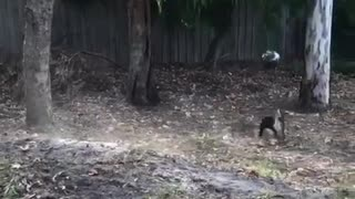 The dog wants to become a football player