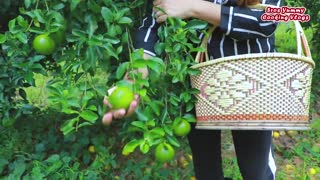 Picking some orange in the forest _ Natural orange fruit eating _ Food cooking