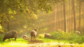 New Relaxing Meditation Music, Study Music, Music Therapy Video