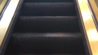 Little poofy grey dog rides on a escalator