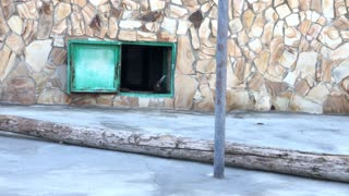 Leopard Kittens Run Away from Mom