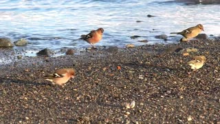 Birds eating in the lake shore - With great music