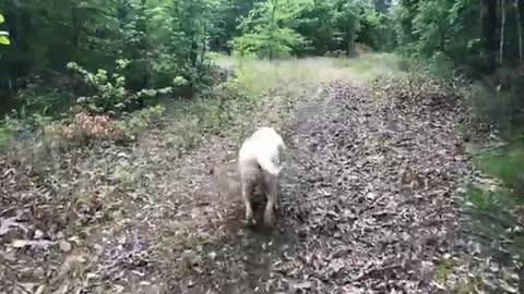 Wednesday Walk In the Woods - Episode 5