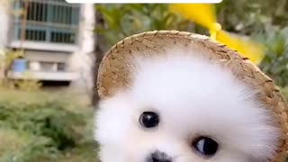 Cute Little Puppy Just Wants to Fly Away