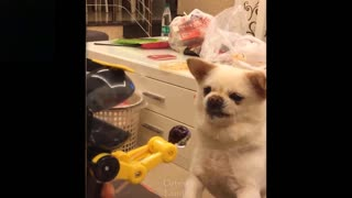 Funny pets just doing their stuff