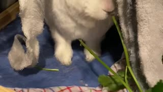 Hungry hungry rabbit.