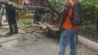 Árbol cae en el parque de Bolívar