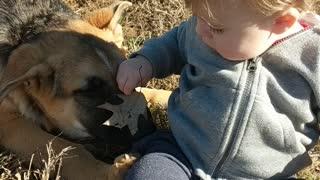 Gentle German shepherd puppy