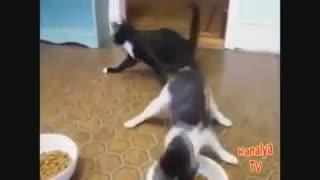 Gatos borrachos & Graciosos