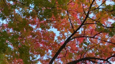 beautiful rotating autumn