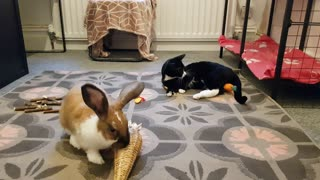 Bunny and kitty play together in perfect harmony