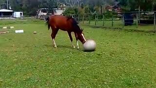 Cheeky Horses Love To Horse Around
