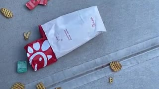 Dude Drops Fast Food in Trying to Save Bee