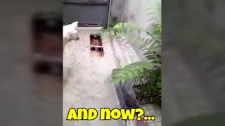 Funny dog with the skateboard
