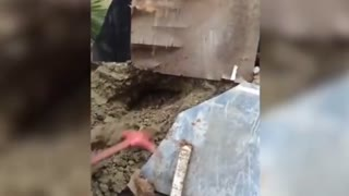 A man catches huge COBRA coming out of hole with his bare hands