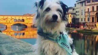 Dog wearing blue emma bandana sits on wall alongside river and howls