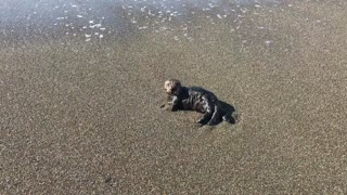 Baby sea otter rescued after getting lost in storm