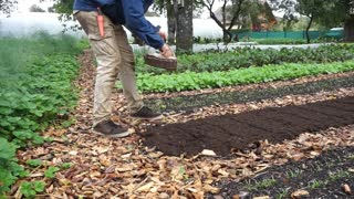 How to Plant Garlic From Start to Finish