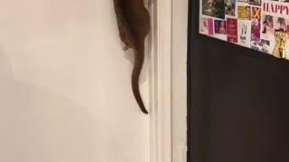 Smart Kinkajou Makes Its Escape
