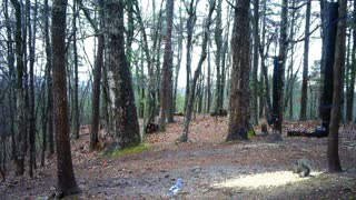 The Woods - 03/01/2021