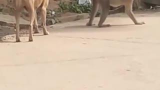 Funny Animal Video 😀