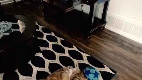 Jax20 vicious pup