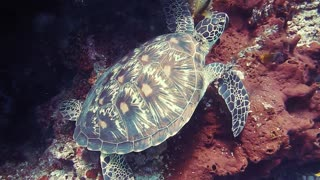 turtle underwater - under the sea