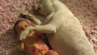 Nanny pit bull preciously watches over baby