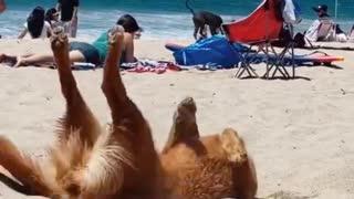 Funny Dog Videos d
