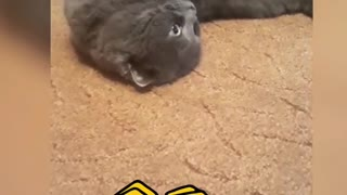 Cute video about the cat.