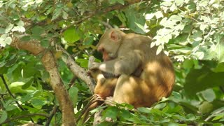 Monkey playing with his son