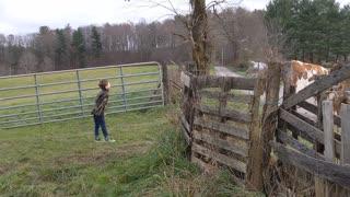 6 year old herding cows