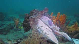 Octopus feasts on discarded shark head