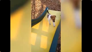 TRY NOT to LAUGH Animals FUNNY PET FAILS Compilation 2021 | Epic Pet Videos & Moments🤣🤣 🐶🐱
