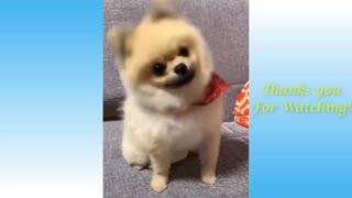 Adorable Dog Action