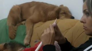 Dog falls asleep in comically awkward position