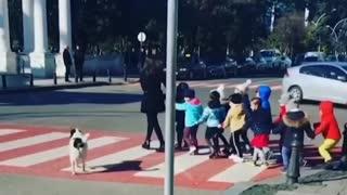 Dog Help Kids To Cross The Road