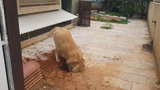 This dog is caught in the act of trying to escape quarantine