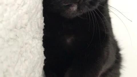 Up side down mini cat