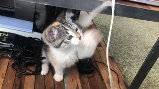 Cat vs laptop
